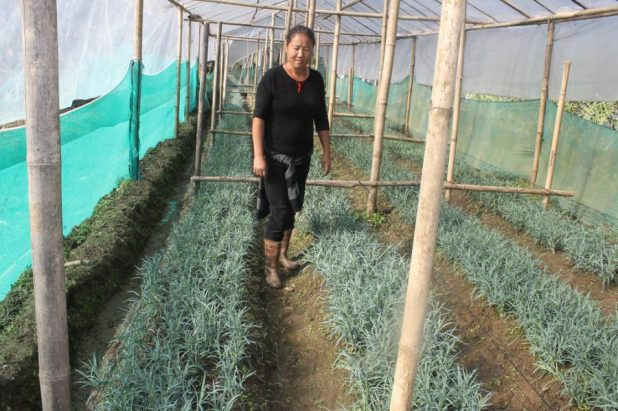 Greenhouses are needed to grow produce that does not respond to cold weather [image by: Nita Narash]