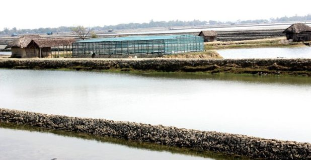 Rice farms are increasingly converted to shrimp ponds in coastal Khulna division, southwest Bangladesh, as seawater pushes further in [image by: Manipadma Jena]