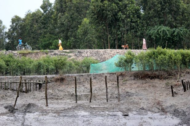 As tidal river Durgaduani tears into their earthen embankments with every high tide, islanders living deep inside the Indian Sundarbans desperately try to save farms and homes [image by: Manipadma Jena]