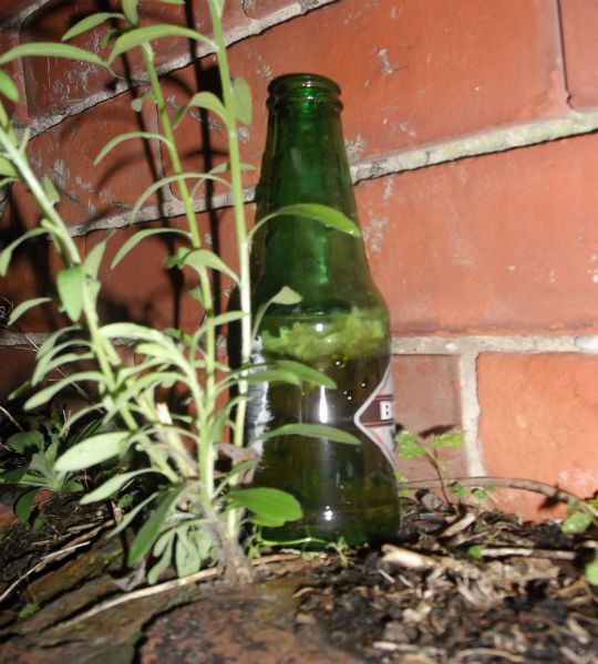 Mouldy beer bottle