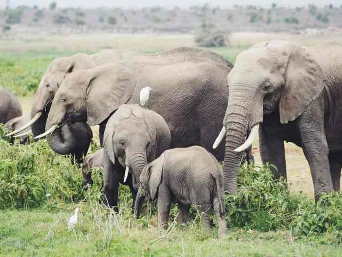 Wildlife experiences: memorable + ethical to inspire your travels   latest news live   find the all top headlines, breaking news for free online april 8, 2021