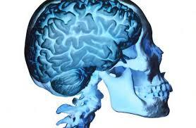 cerveaux2