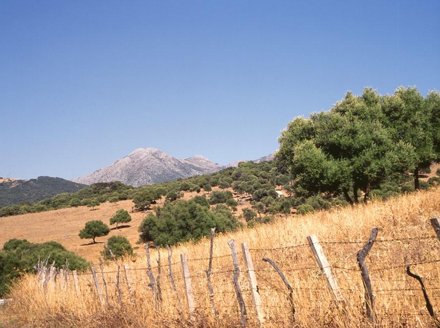 Cádiz - Parque Natural de la Sierra de Grazalema  - Alcornoque / © Ente Spagnolo del Turismo - Turespaña