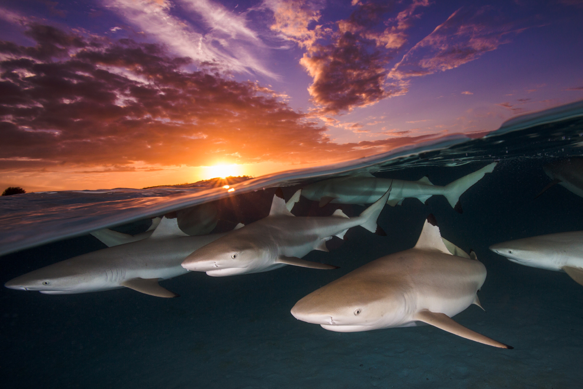 Blacktip Rendezvous