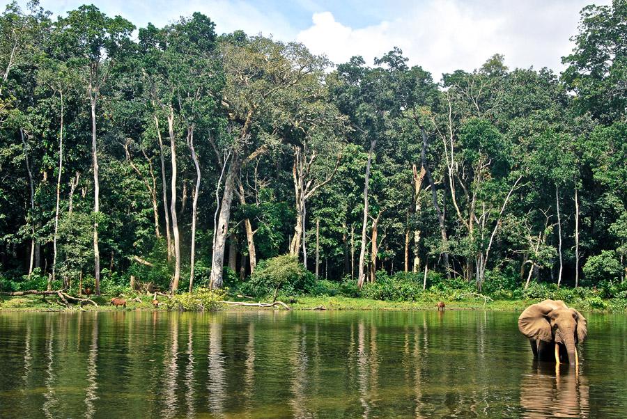 Repubblica Democratica del Congo / © www.africarivista.it