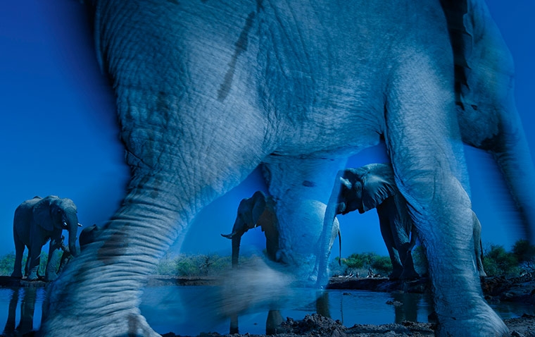 Wildlife photographer of the year 2013 and animal portraits winner: Essence of Elephants by Greg du Toit (South Africa)