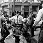 dogattack_civilrights