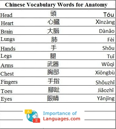 Chinese Words for Anatomy