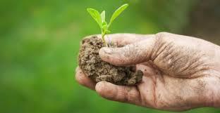 Bando pubblico per l'insediamento dei giovani in agricoltura.