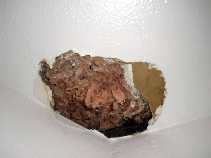 Moisture Damaged Ceiling Insulation