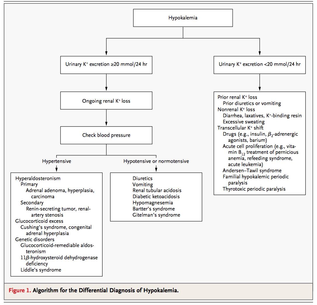 Potassium Homeostasis  IM Reference