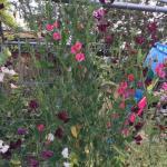 apiary greenhouse