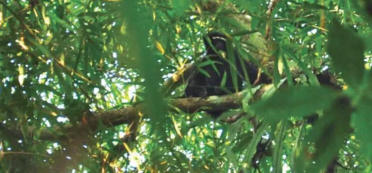 Lowacherra Rain Forest