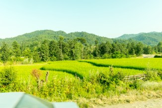 Rice & Hills