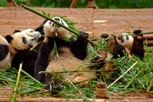 Bamboo Battle
