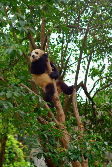 Monkey Panda