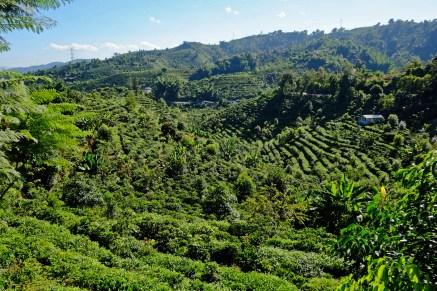 Nearly tropical Vegetation