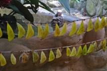Banana Cocoons