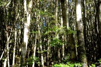 Da sieht man ja den Wald vor lauter Bäumen nicht