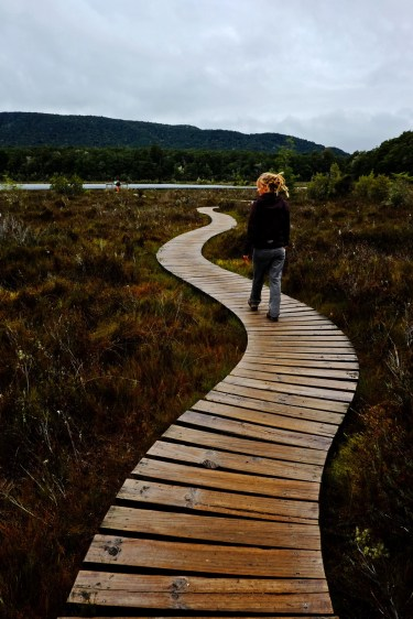 Swamp Boardwalk