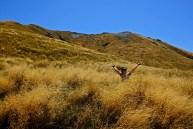 Wavy Grass Ocean