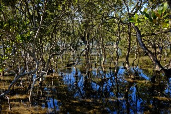 Mangrove Forests on the Coast