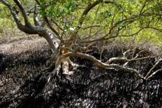 Salt Filtering Roots