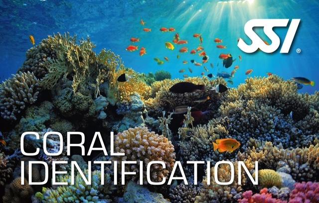 coral identification