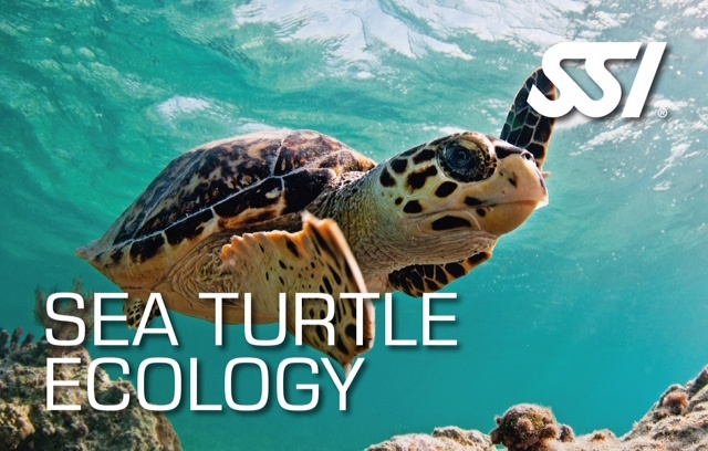 ssi specialty sea turtle ecology