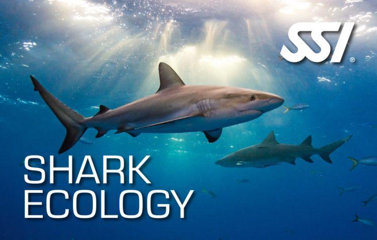 shark ecologi