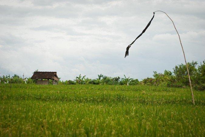where to live in bali canggu
