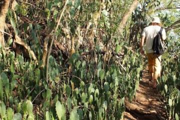 padang-bai-cactus-forest