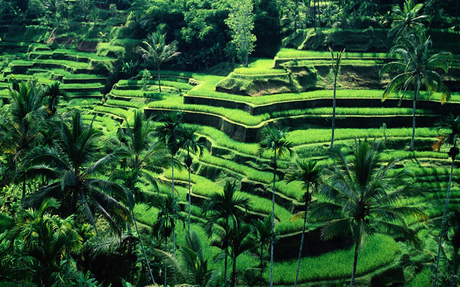 Jatiluwih Rice Terraces via Agung tours.