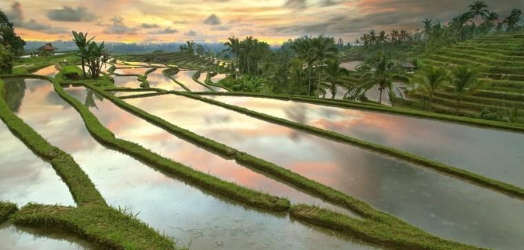 Jatiluwih-rice-terraces-bali