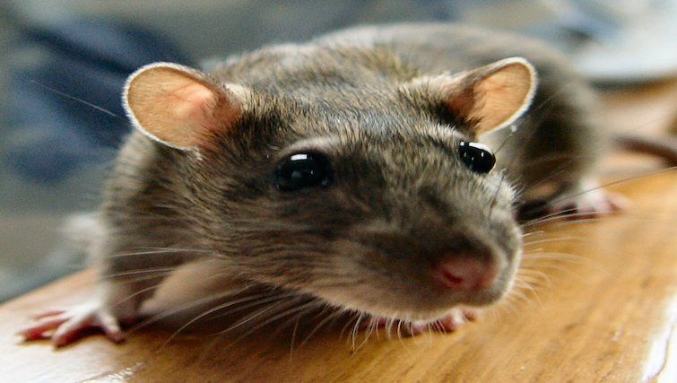 The finest rodent I have ever made love near to.