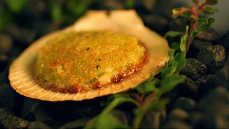 Cuca - baked Christmas scallop
