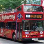 gray-line-bus