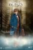 Fantastic Beasts - 1/6 Newt Scamander