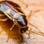 This Famous Airline Just Served a Cockroach in a First Class Meal