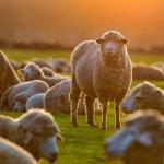 Need Fresh Ideas? 5 Ways to Disrupt Groupthink