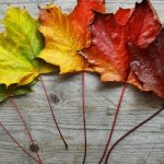 8 Strategies to Manage September Overwhelm and Embrace the Fall Season