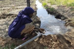 canale d'irrigazione in un campo nel comune di Petté, Estremo Nord Camerun