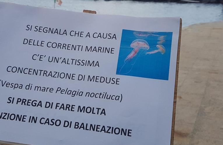 Napoli, invasione di meduse nell'area protetta