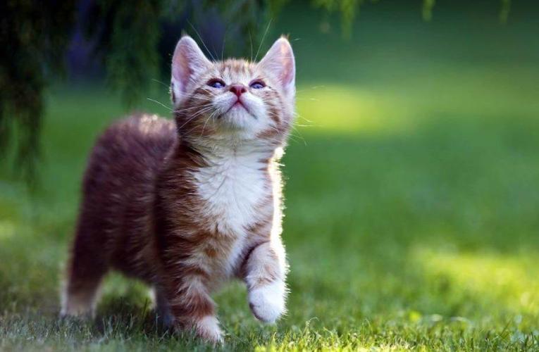 Uccide un gatto per mangiarlo, una denuncia a Canicattì