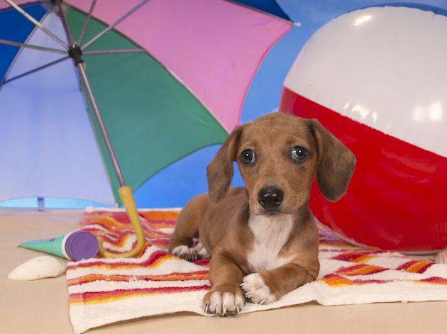 I comuni non possono vietare l'accesso dei cani in spiagge libere