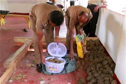 Sri Lanka Police recover 1200 star tortoises and banned glyphosate smuggled from India