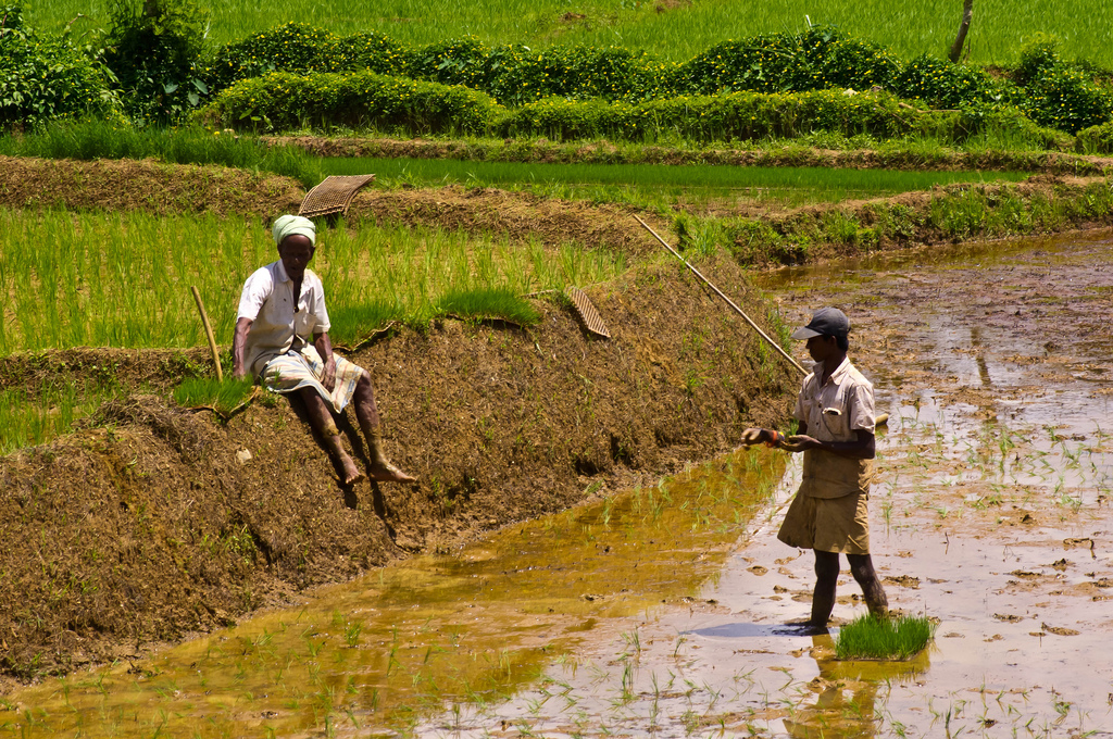 All Ceylon Farmers' Federation commends government's decision to provide fertilizer instead of money
