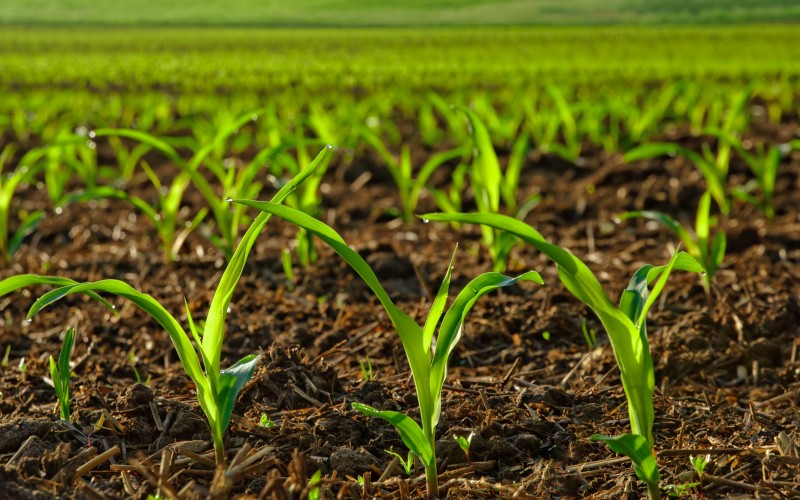 Growing anxiety over delayed fertiliser shipment