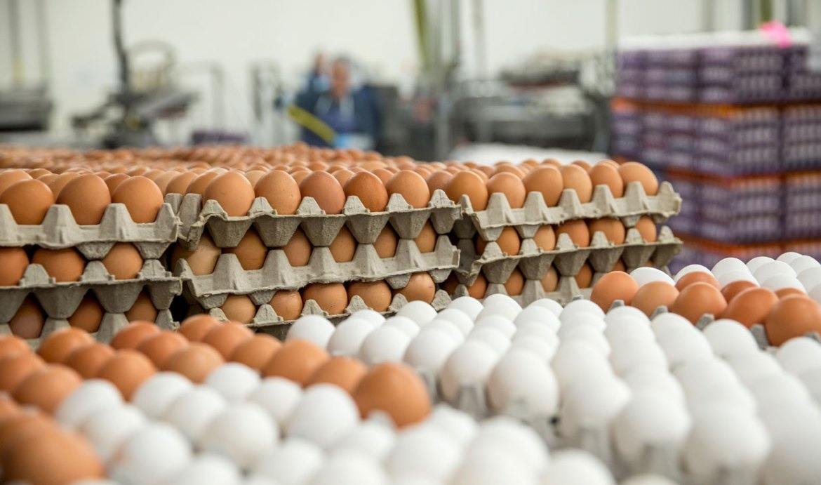 No egg imports to Sri Lanka from Monday as local production sufficient