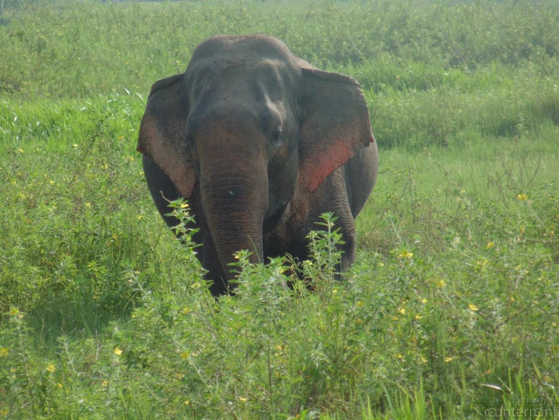 Human – Elephant Conflict